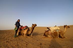 Camels, Sam