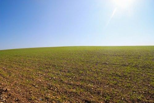Dorset Field, Durweston
