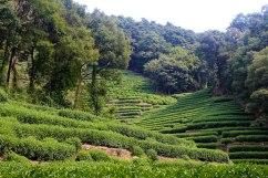 Longjing Tea Plantation, Hangzhou