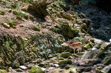Fallow Deer, Parco Villa Pallavicino