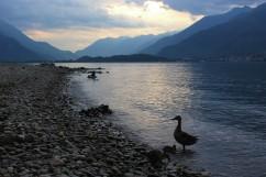 Lago di Como, Gravedona ed Uniti